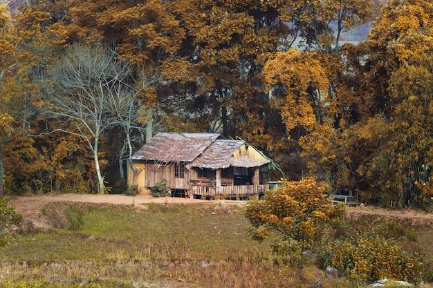 秋の森の茅葺き屋根の下の装飾的な木造の丸太小屋