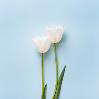 Decorative tulip flowers on a colorful background