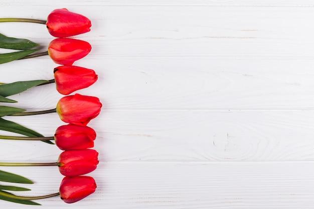 Decorative tulip flowers