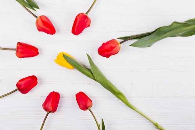 Декоративные цветы тюльпана