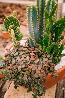 Decorative variety of succulent plant in brown pot