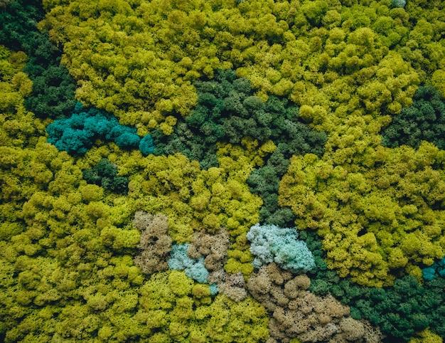 Декоративная стена из зеленого мха. деревенский фон.