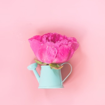 Decorative watering can with pink peony flowers on pink. gardening concept.