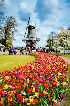 キューケンホフ公園の装飾風車。花の色とりどりのチューリップ畑を歩く観光客