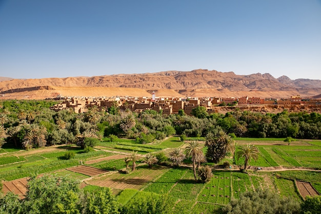 Dedos de mono в марракеше, марокко
