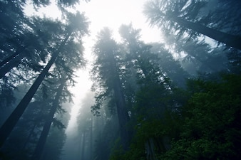 深い霧の森