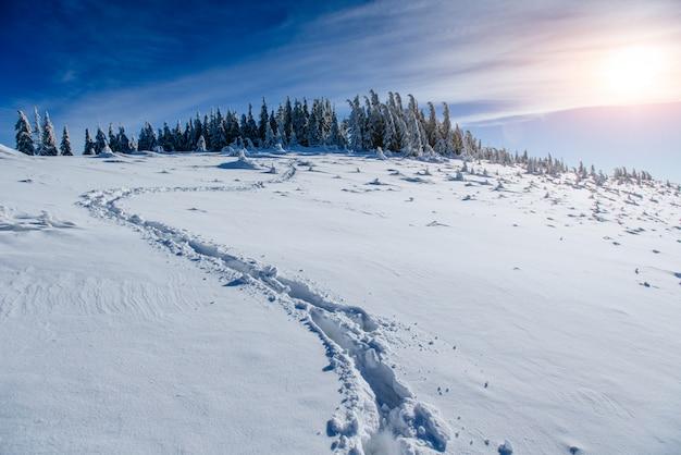 Deep footprints in the snow