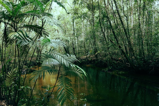 Deep forest river with green plant tree and palm leaves natural green jungle