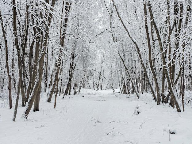 深い森の冬の雪道。森の中の降雪。