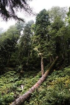 背景の深い緑の秋の生い茂った森