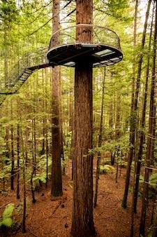 緑豊かなレッドウッドの森の奥深くに吊るされた木を歩く背の高いネイティブプンガシダの上を歩く