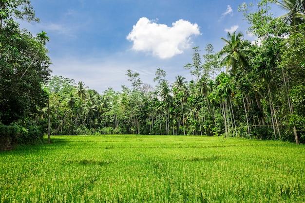 Глубокие джунгли леса шри-ланки