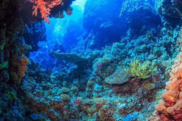 Deep sea exploration red sea egypt
