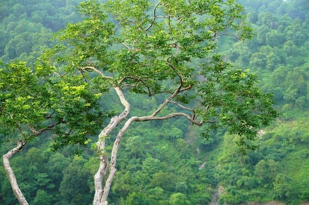 Изображение дерева с фокусом на глубокую траншею с изображения неба