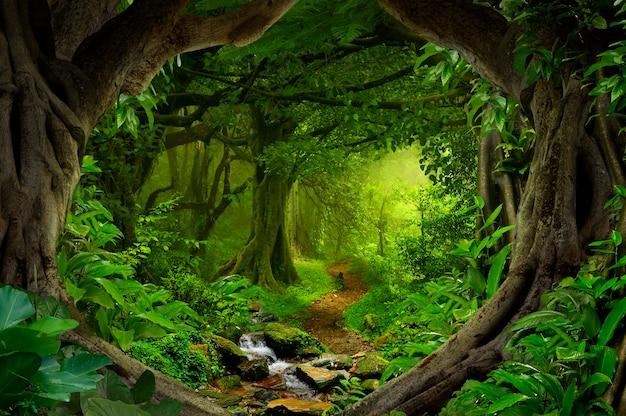 동남아시아의 깊은 열대 정글