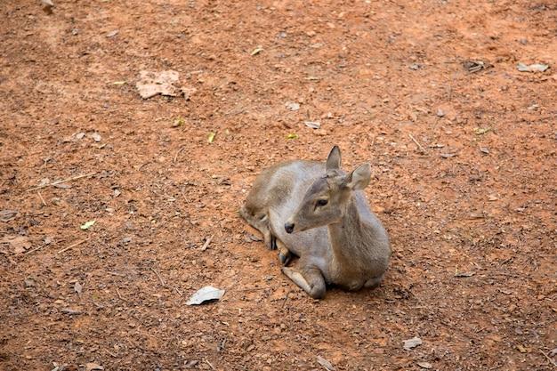 Олень животное на земле зоопарка