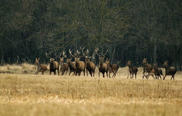 Deer animals fleeing forest running
