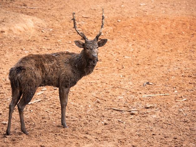 Deer are beautiful animals