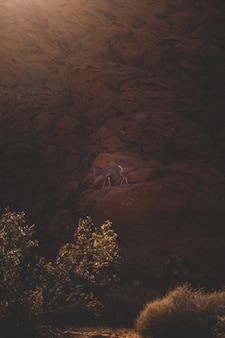 Deer climbing a red rocky formation