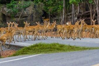 Deer crossing the street background