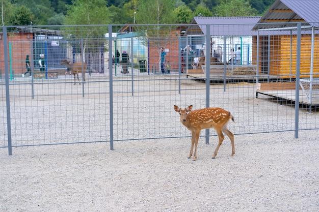 Deer cub in an aviary
