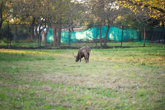 Олень ест траву в парке