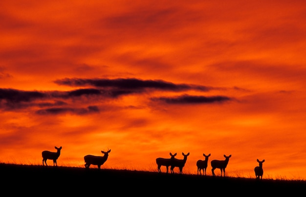 Deer on hill at sunset