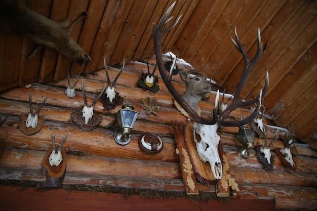 Оленьи рога на деревянной стене