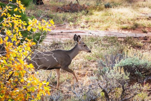 秋の牧草地、アメリカの鹿