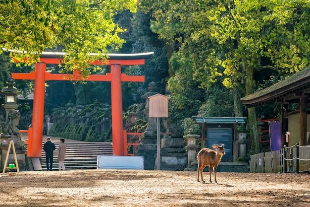 Олень в центре города нара, япония