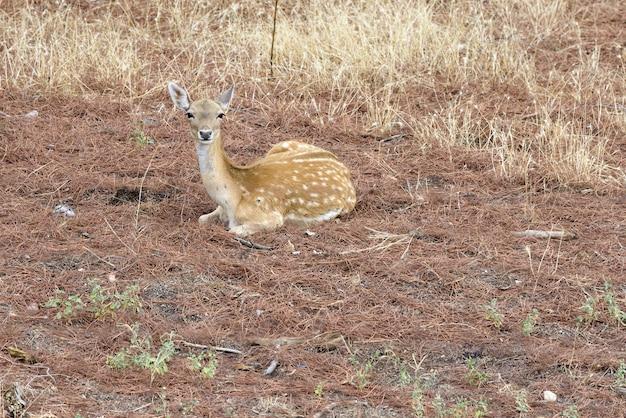 昼間の森の中の鹿