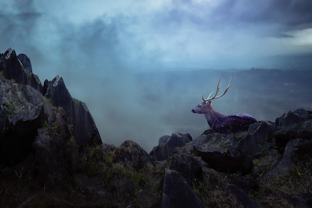 Deer in the mountain