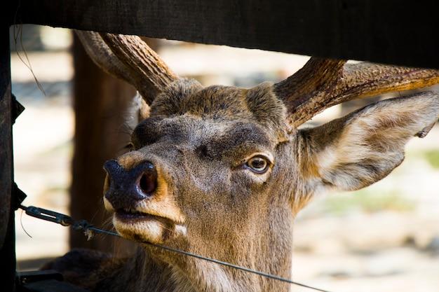 鹿の肖像画のクローズアップ、ベルリン動物園の野生動物