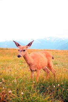 フィールドで鹿の立っている