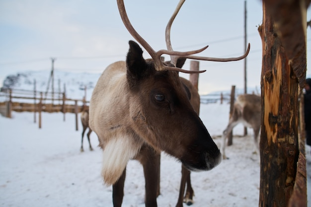 Deers shot from a wildlife zoo in winter