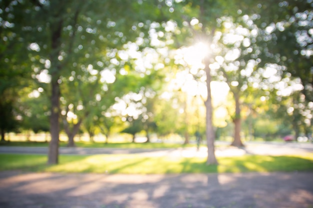 晴れた日、背景の開花木と庭の多重背景のボケ味