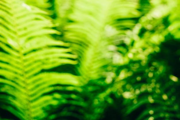 Defocused bokeh of green fern leaves