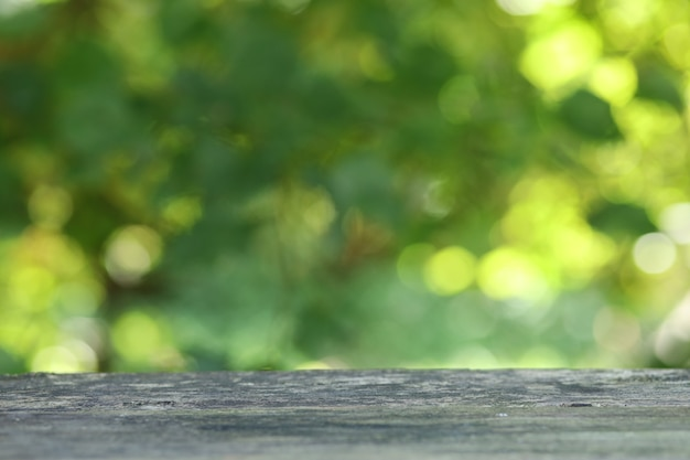 Defocused green foliage background