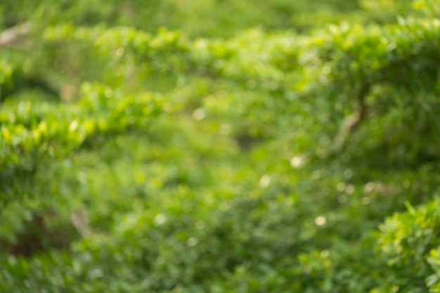 多重緑の葉の背景