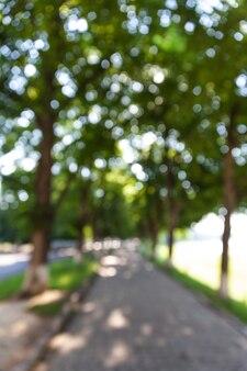 나무와 햇빛이 있는 거리의 디포커스 이미지