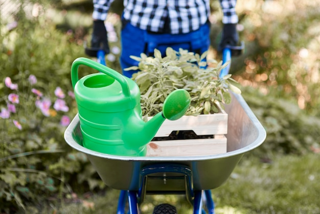 Defocused man riding wheelbarrow with seedling and watering can