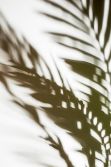 Defocused palm leaves shadow on white backdrop