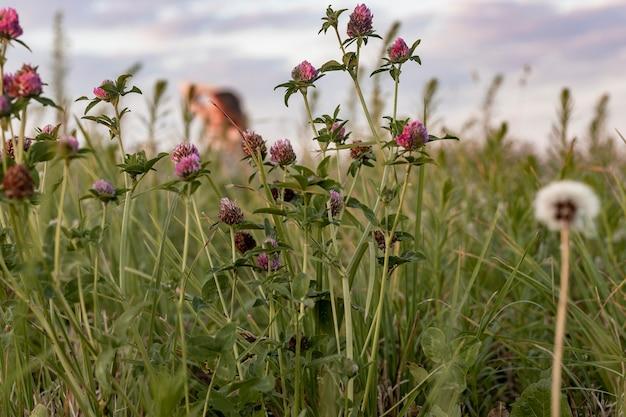緑の草と休息のさまざまな花の概念を持つ夏のフィールド内に座っている焦点がぼけた女性...