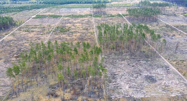 Вырубка леса. для промышленных целей уничтожена большая площадь зеленых насаждений. вид с воздуха