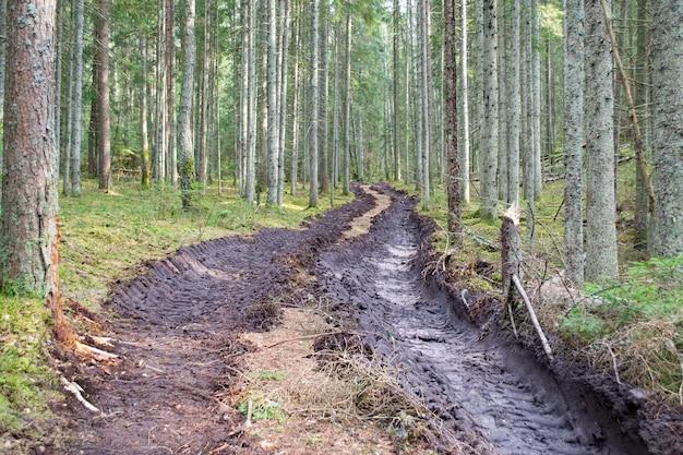 삼림 벌채 및 벌목 산림 개간 목재 제거 대형 트럭 트랙터 또는 불도저 로더 타이어