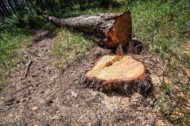 森林伐採と違法伐採。木を切る。カットされた木のスタック。違法な森林の消滅。環境金属と生態学的問題