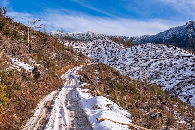 Вырубка леса, вырубка леса