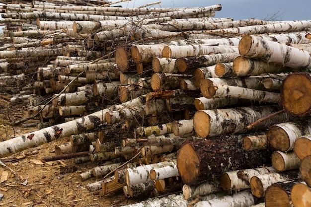 森林破壊、森林破壊。材木の収穫。松と白樺の木の多くの鋸で挽かれた丸太の山、スタック。高品質の写真