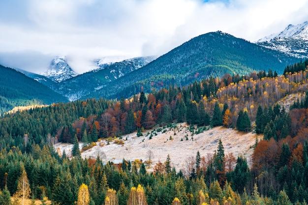 Вырубка карпатских лесов чудесной теплой осенью в необычной природе украины