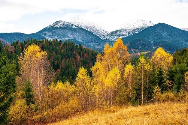 우크라이나의 특이한 자연의 멋진 따뜻한 가을에 카르파티아 숲의 삼림 벌채